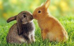 100个关于兔子的网名【精选】
