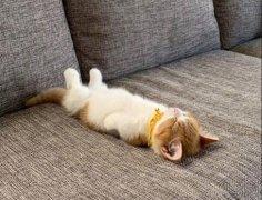 关于躺平的句子 表示要躺平的文案